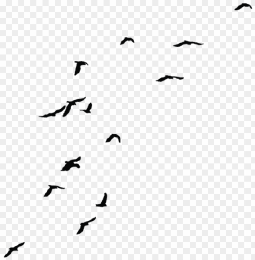 free PNG birds png fils - transparent background fly bird PNG image with transparent background PNG images transparent