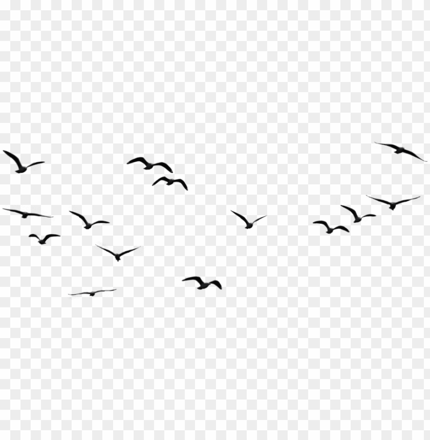 free PNG birds png image1 - birds flying in the sky PNG image with transparent background PNG images transparent