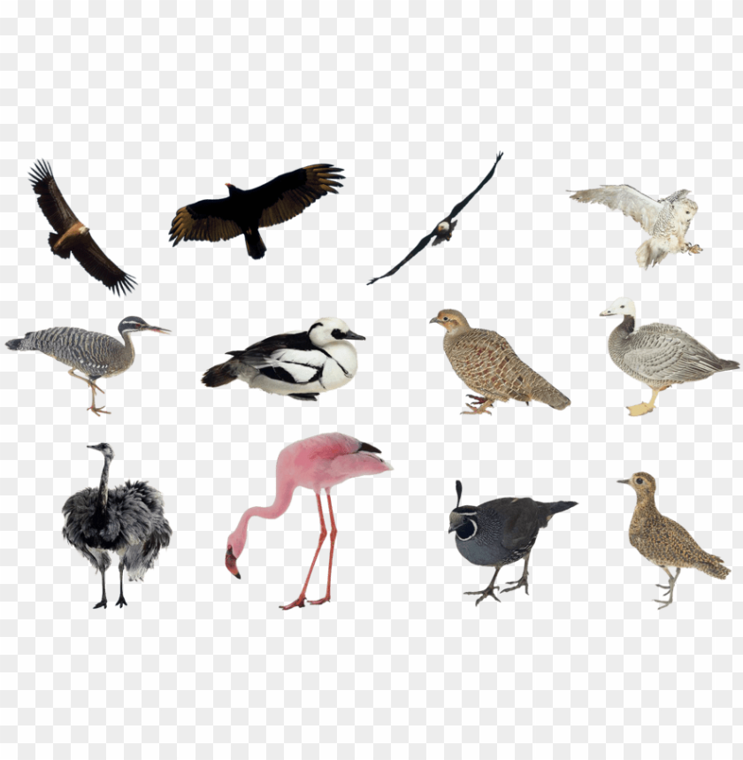 free PNG birds png set by mossi889 - birds collage PNG image with transparent background PNG images transparent