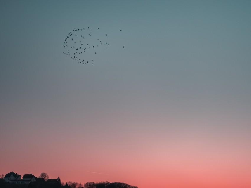 free PNG birds, sky, flight, flock background PNG images transparent