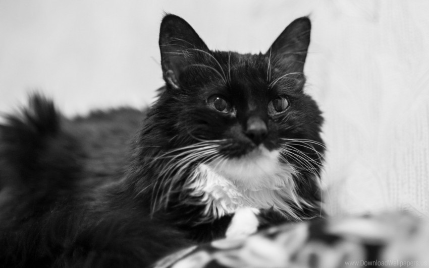 free PNG black and white, cat, couch, eyes, smile wallpaper background best stock photos PNG images transparent