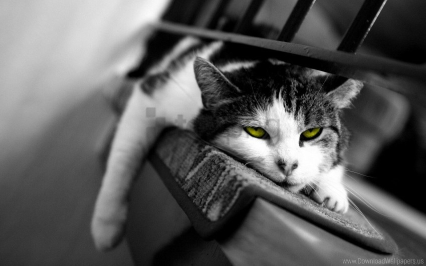free PNG black and white, cat, down, sleepy, tired wallpaper background best stock photos PNG images transparent