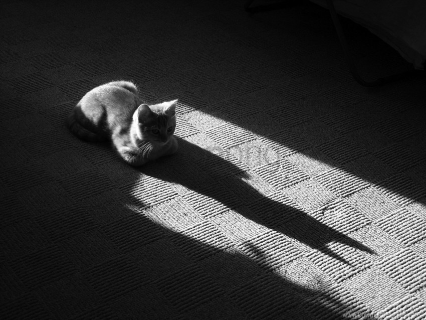 free PNG black and white, cat, floor, lying, muzzle, shadow wallpaper background best stock photos PNG images transparent