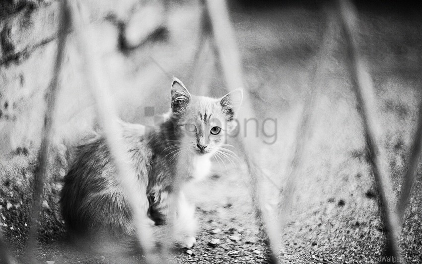 free PNG black and white, cat, hide, sit wallpaper background best stock photos PNG images transparent