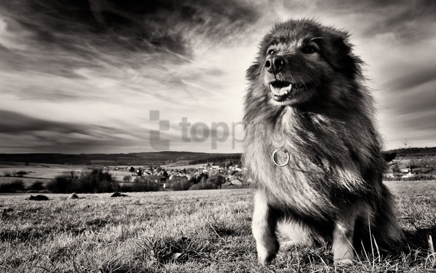 free PNG black and white, dog, grass, wind wallpaper background best stock photos PNG images transparent