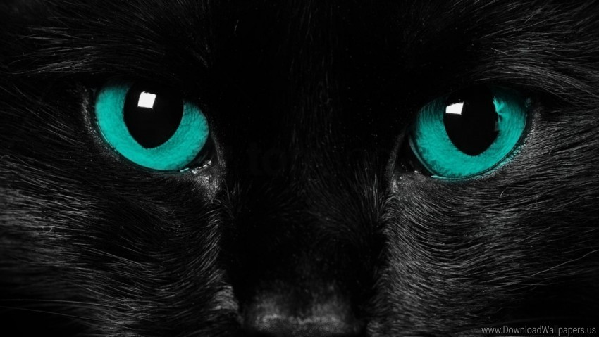 Black Cat Close Up Eyes Wallpaper Background Best Stock Photos Toppng
