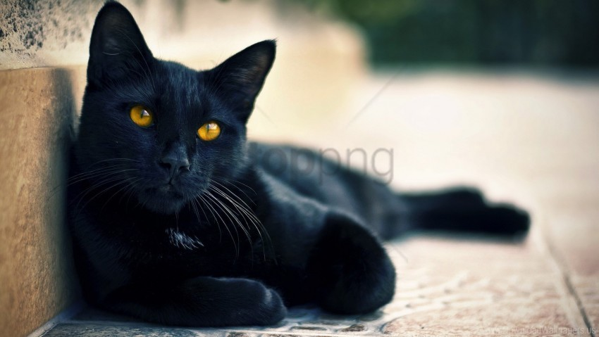 free PNG black cat, lying, rest wallpaper background best stock photos PNG images transparent