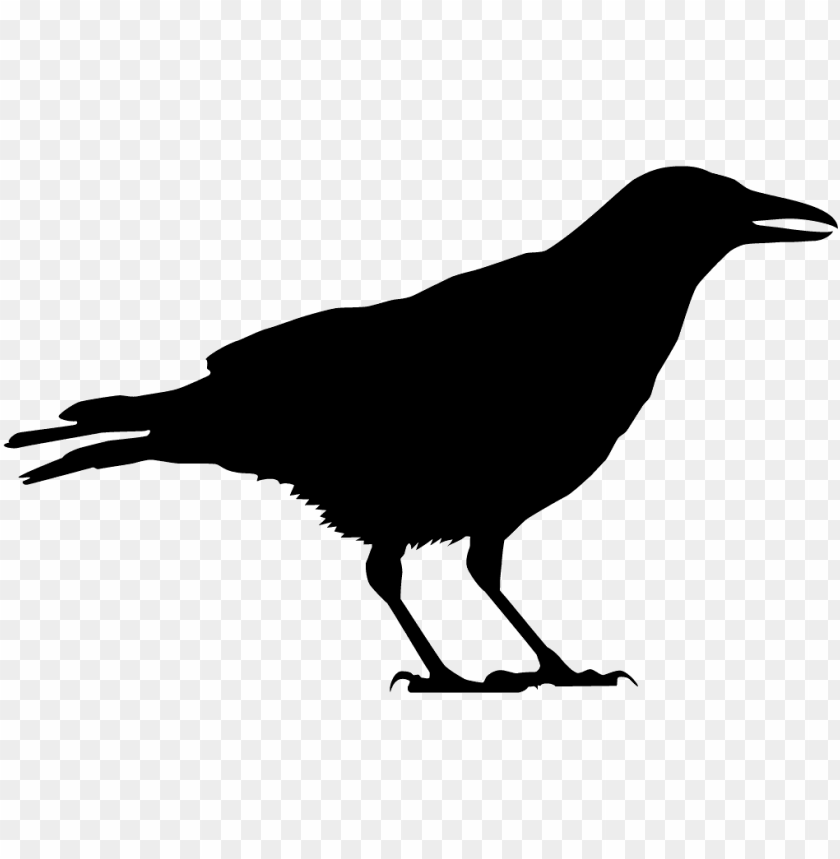 free PNG black crow silhouette PNG image with transparent background PNG images transparent