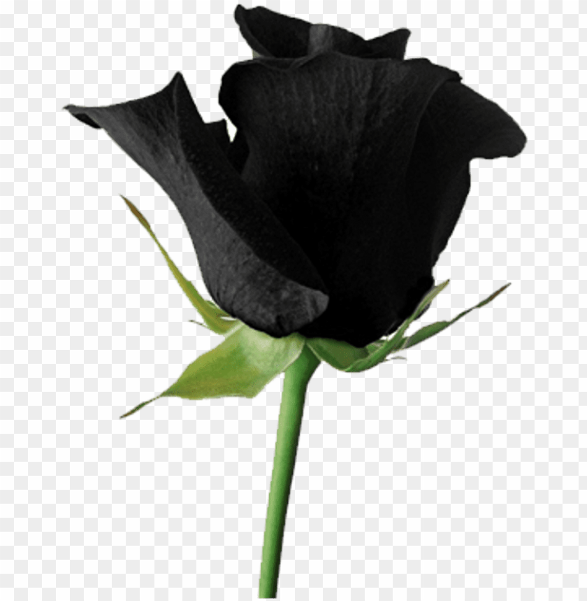 free PNG black goth tumblr aesthetic rose flower png goth flowers - roses black tumblr PNG image with transparent background PNG images transparent