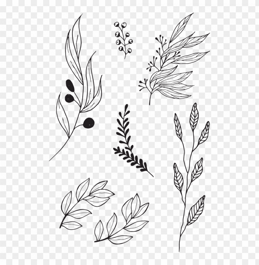 free PNG black twigs set - olive leaves tattoo PNG image with transparent background PNG images transparent