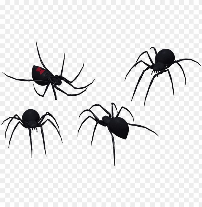 free PNG black widow spider png graphic royalty free stock - black widow spider vector PNG image with transparent background PNG images transparent