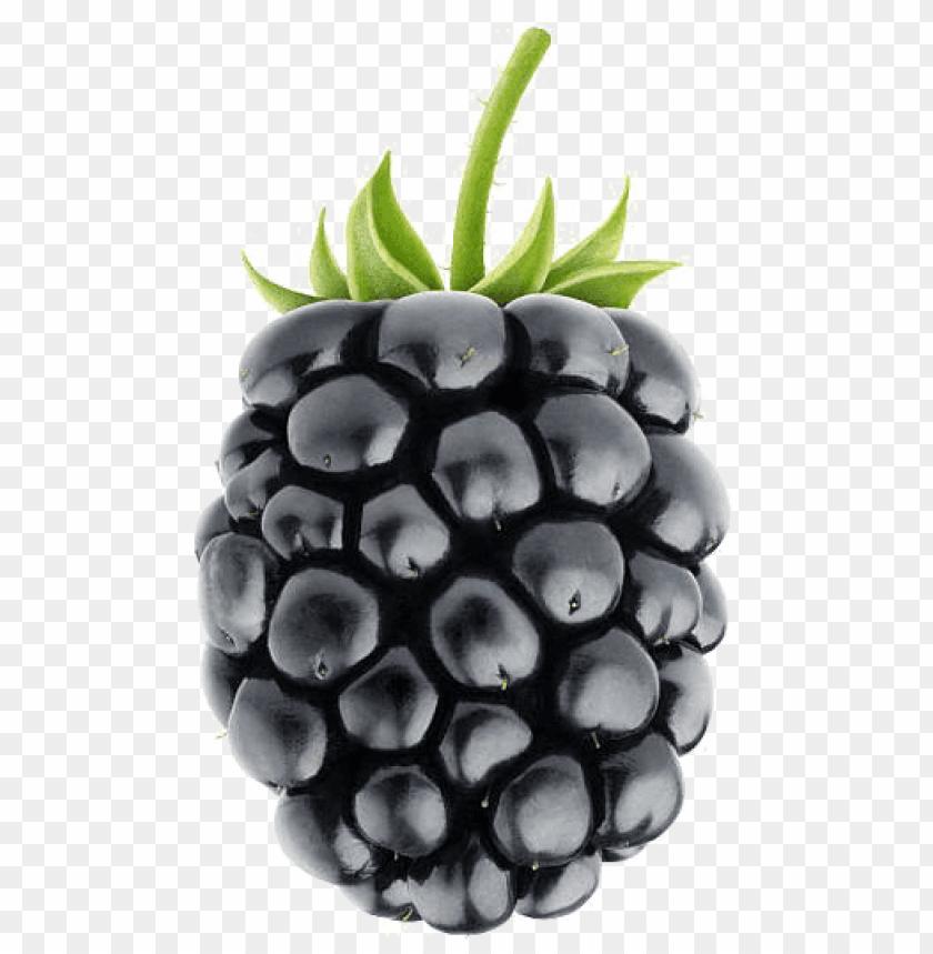 free PNG blackberry fruit png image background - blackberry fruit PNG image with transparent background PNG images transparent