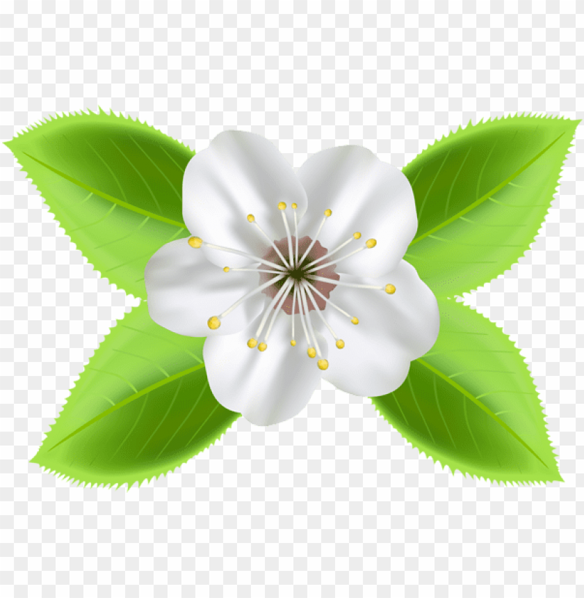 free PNG Download blooming spring flower png images background PNG images transparent