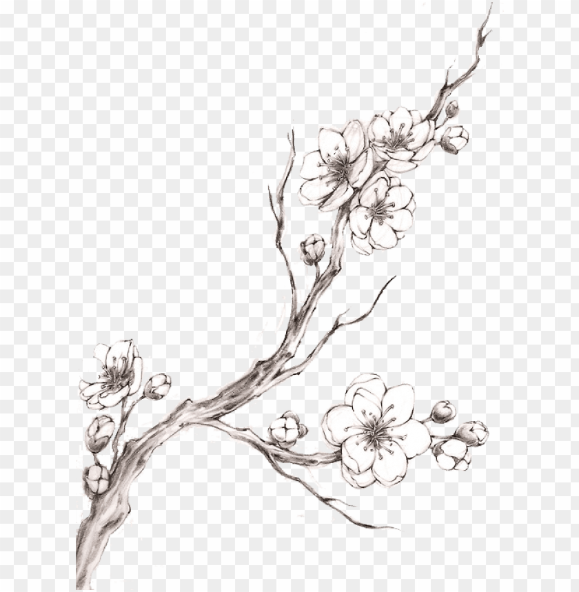 free PNG blossom tattoo watercolor transprent png free download - cherry blossom tattoo black and white PNG image with transparent background PNG images transparent