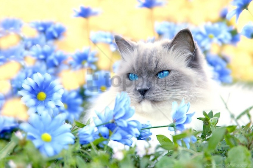 free PNG blue, cat, eyes, flowers, furry, grass, lie wallpaper background best stock photos PNG images transparent