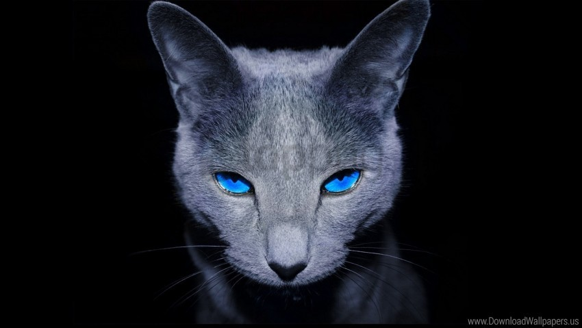 free PNG blue-eyed, cat, dark, shadow wallpaper background best stock photos PNG images transparent