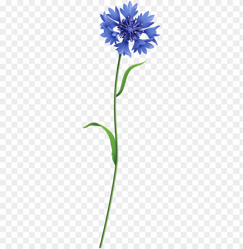 free PNG blue field flower png clip art image - field flower PNG image with transparent background PNG images transparent