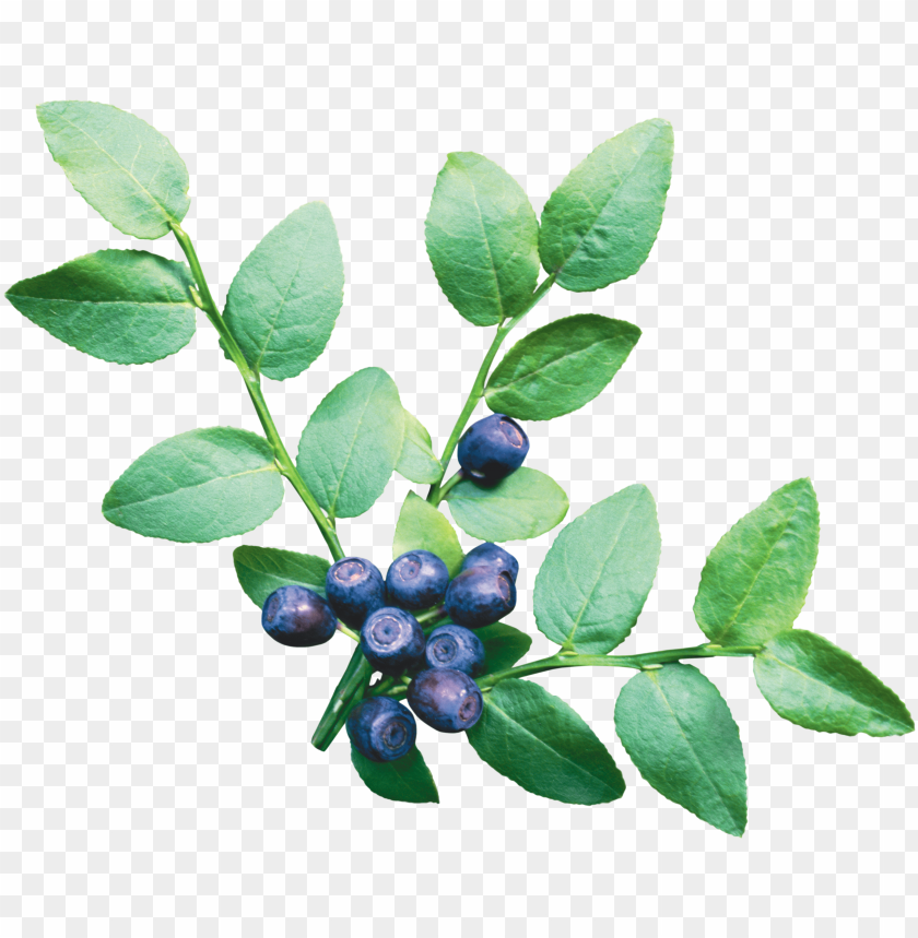 free PNG Download blueberries png images background PNG images transparent