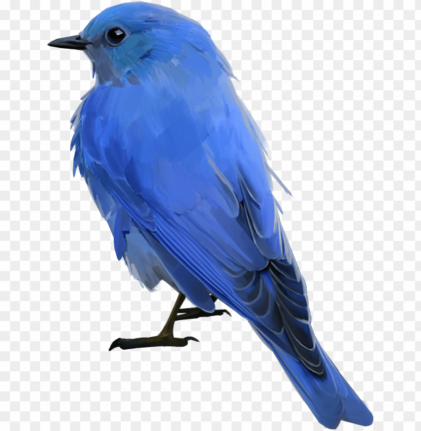 free PNG bluebird - mountain bluebird PNG image with transparent background PNG images transparent