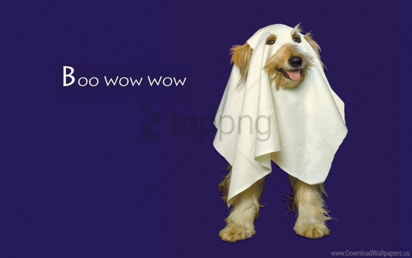 free PNG boo wow wow wallpaper background best stock photos PNG images transparent