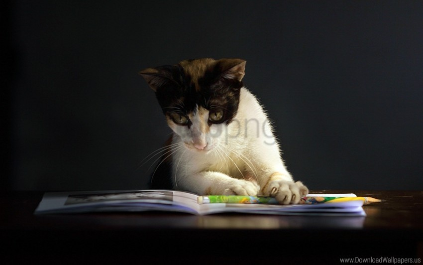 free PNG book, cat, curiosity, dark, spotted wallpaper background best stock photos PNG images transparent