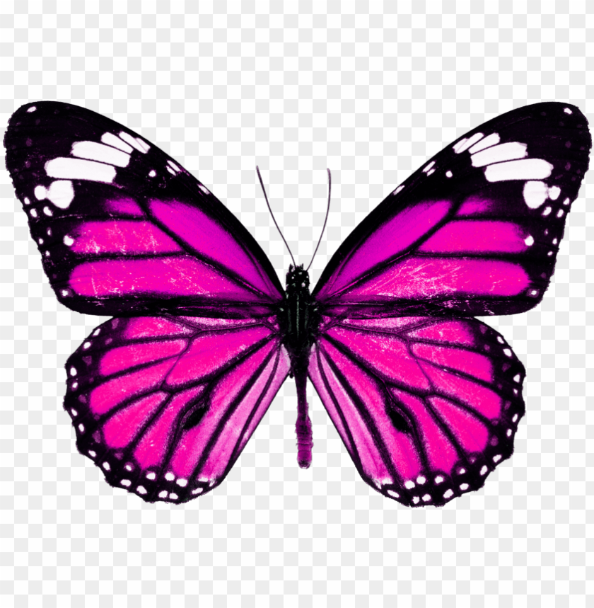free PNG borboletas sticker - monarch butterfly high resolutio PNG image with transparent background PNG images transparent
