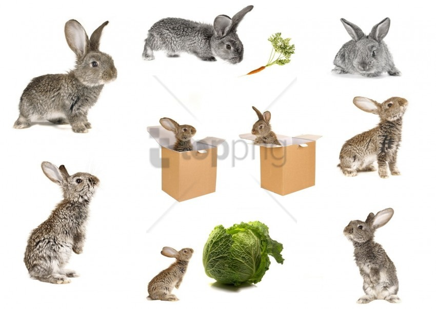 free PNG box, cabbage, carrots, rabbits wallpaper background best stock photos PNG images transparent