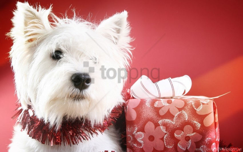 free PNG box, dog, muzzle wallpaper background best stock photos PNG images transparent