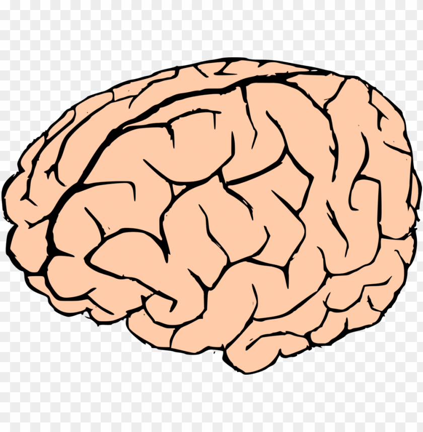 free PNG brain - brain clipart no background PNG image with transparent background PNG images transparent