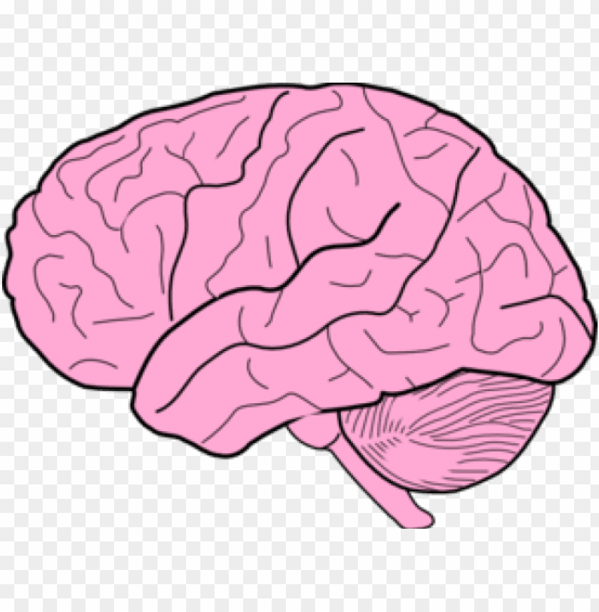 free PNG brain clipart transparent background - brain clipart PNG image with transparent background PNG images transparent
