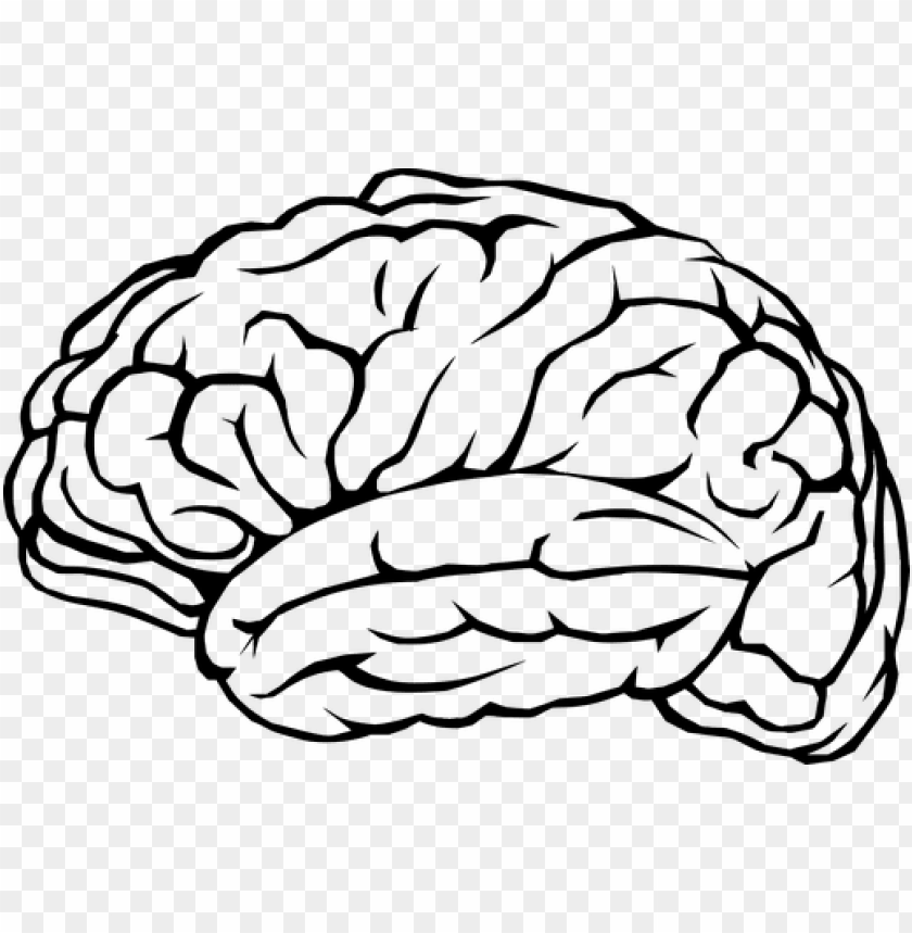 free PNG brain outline png png black and white library - brain PNG image with transparent background PNG images transparent