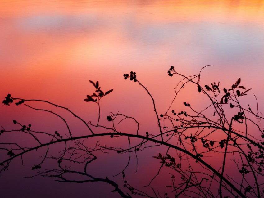 free PNG branch, sunset, shadows, silhouette background PNG images transparent