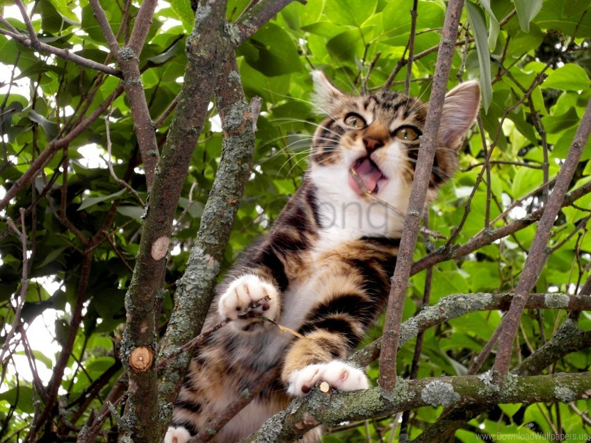 free PNG branches, kitten, lie down, playful, sit, tree wallpaper background best stock photos PNG images transparent