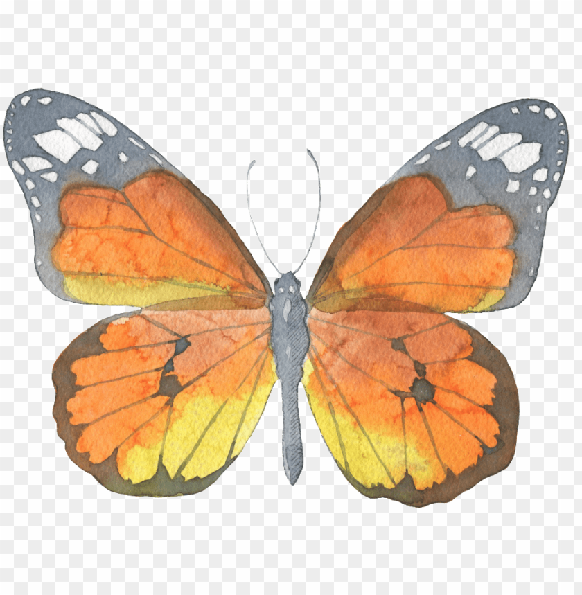 free PNG brown butterfly watercolor transparent decorative pattern - butterfly watercolor PNG image with transparent background PNG images transparent