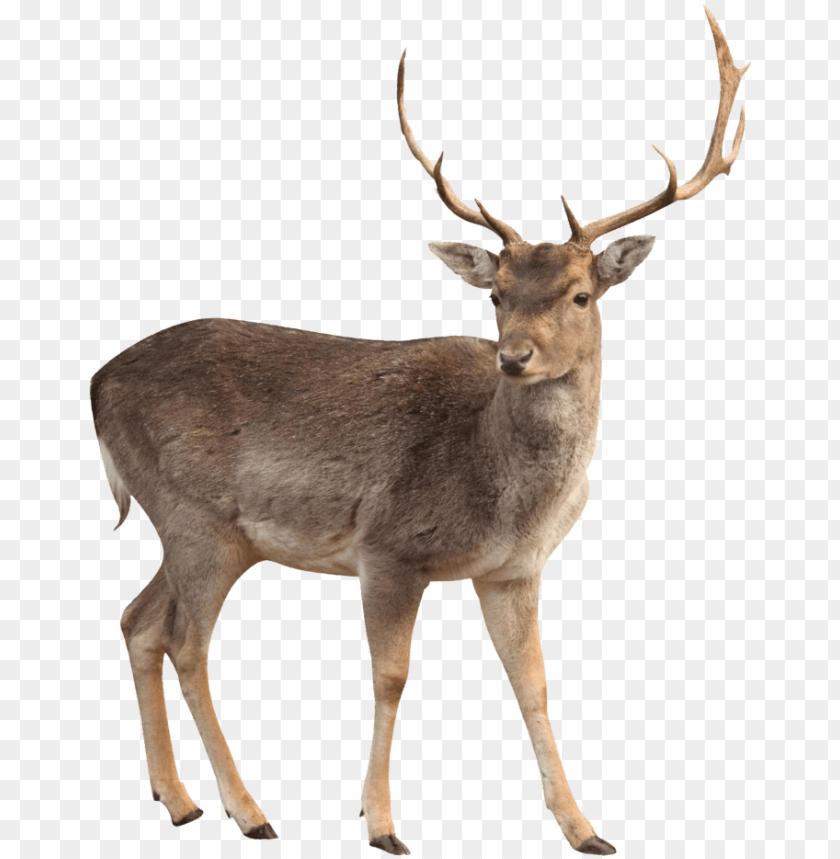 free PNG brown deer standing png image - deer PNG image with transparent background PNG images transparent
