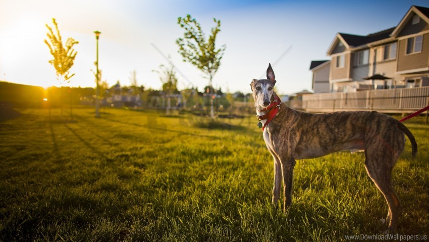 free PNG building, dog, nature, sunlight wallpaper background best stock photos PNG images transparent