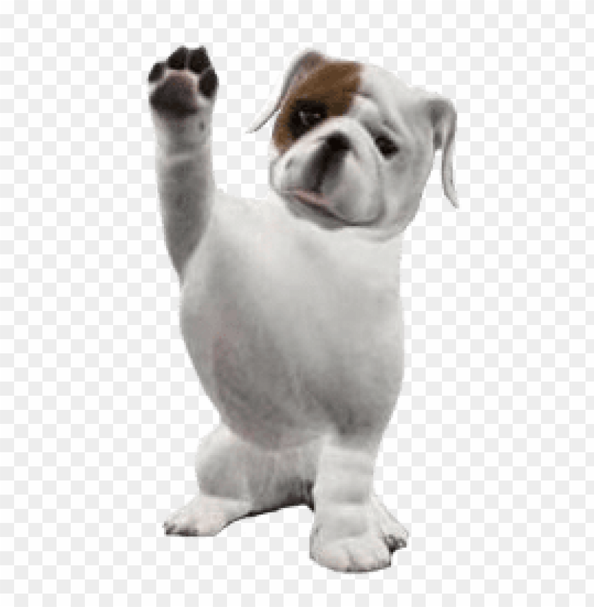 free PNG Download bulldog png images background PNG images transparent