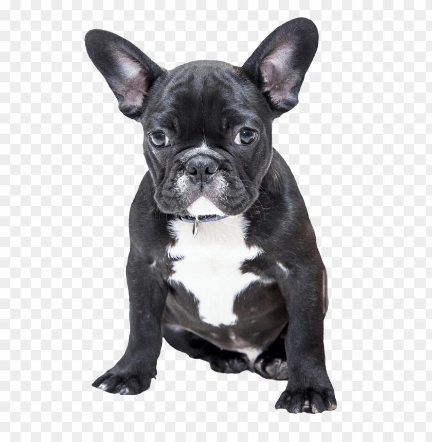 free PNG Download bulldog png png images background PNG images transparent
