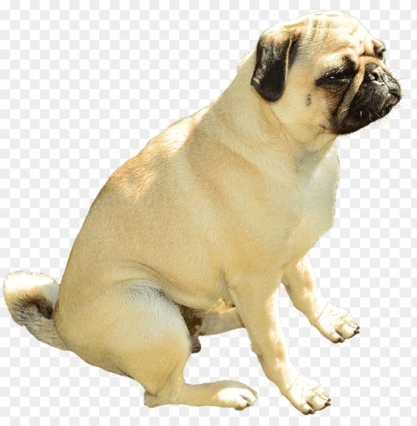 free PNG Download bulldog sitting png images background PNG images transparent