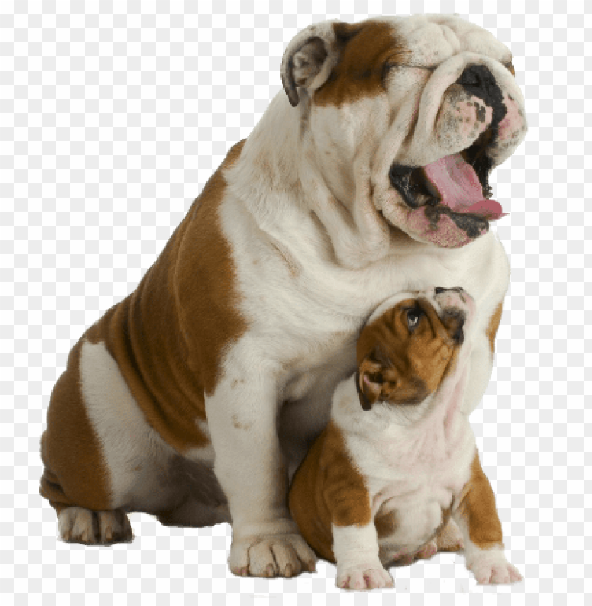 free PNG Download bulldog track wikipedi png images background PNG images transparent