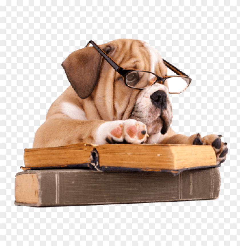 free PNG bulldog with book PNG image with transparent background PNG images transparent