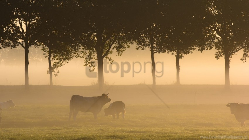 free PNG bulls, field, fog, forest, grass, trees wallpaper background best stock photos PNG images transparent
