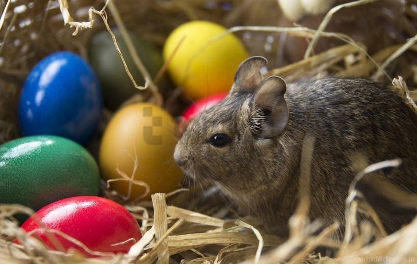 free PNG bunny, easter, eggs wallpaper background best stock photos PNG images transparent