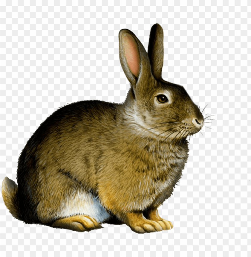 free PNG bunny rabbit png - rabbit PNG image with transparent background PNG images transparent