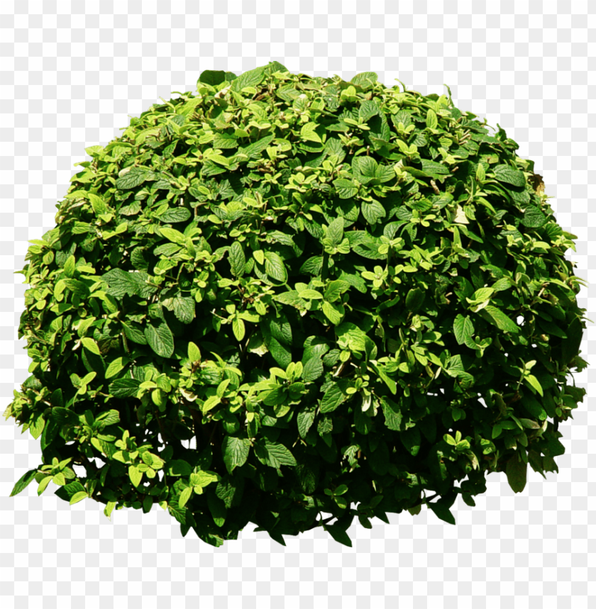 free PNG bush tree png tree png - bushes PNG image with transparent background PNG images transparent