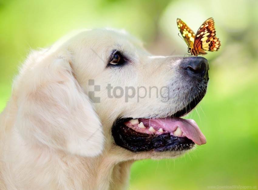 free PNG butterfly, dog, muzzle, spring, summer, tongue sticking out wallpaper background best stock photos PNG images transparent