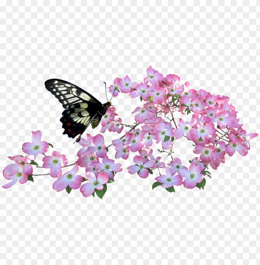 free PNG butterfly, dogwood, flowers - png butterfly in a flower PNG image with transparent background PNG images transparent