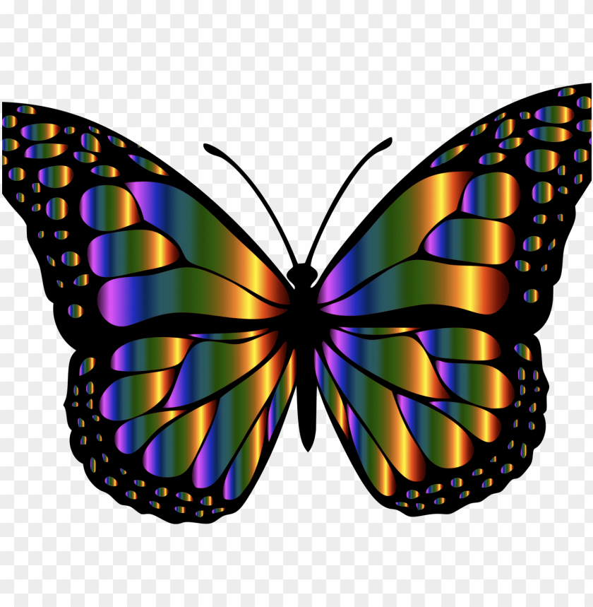 free PNG butterfly insects PNG image with transparent background PNG images transparent
