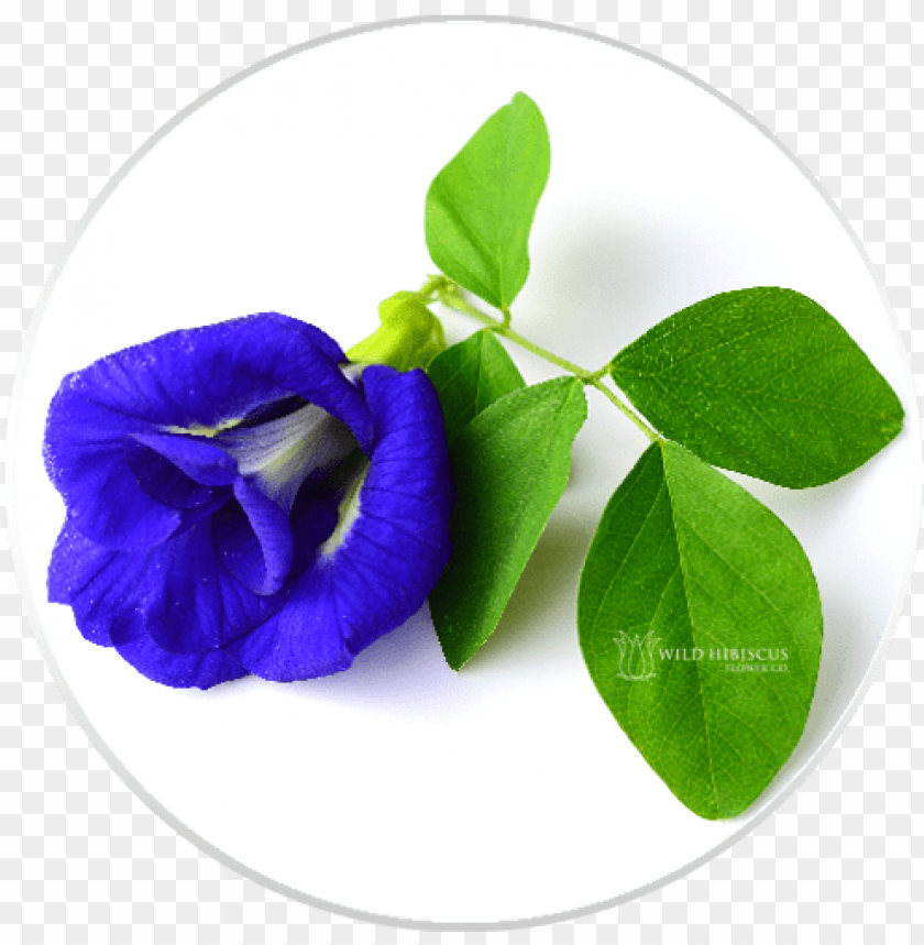 free PNG butterfly pea flowers dried whole - butterfly pea flower PNG image with transparent background PNG images transparent
