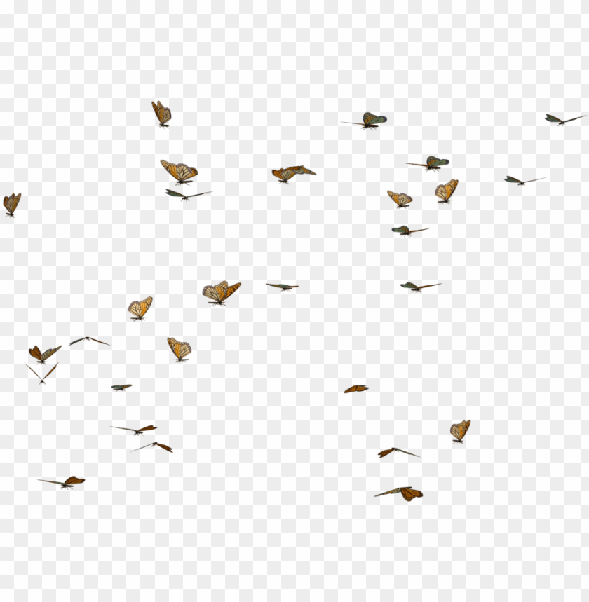 free PNG butterfly swarm stock by clipart freeuse library - transparent butterflies PNG image with transparent background PNG images transparent